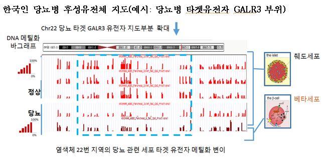 한국인 당뇨병 관련 11종 후성유전체 지도 공개당뇨병 관련 맞춤 예방, 치료 및 관련 약물 개발 발판 마련